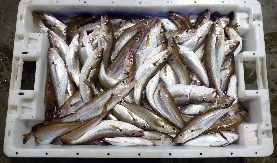 Fisklåda