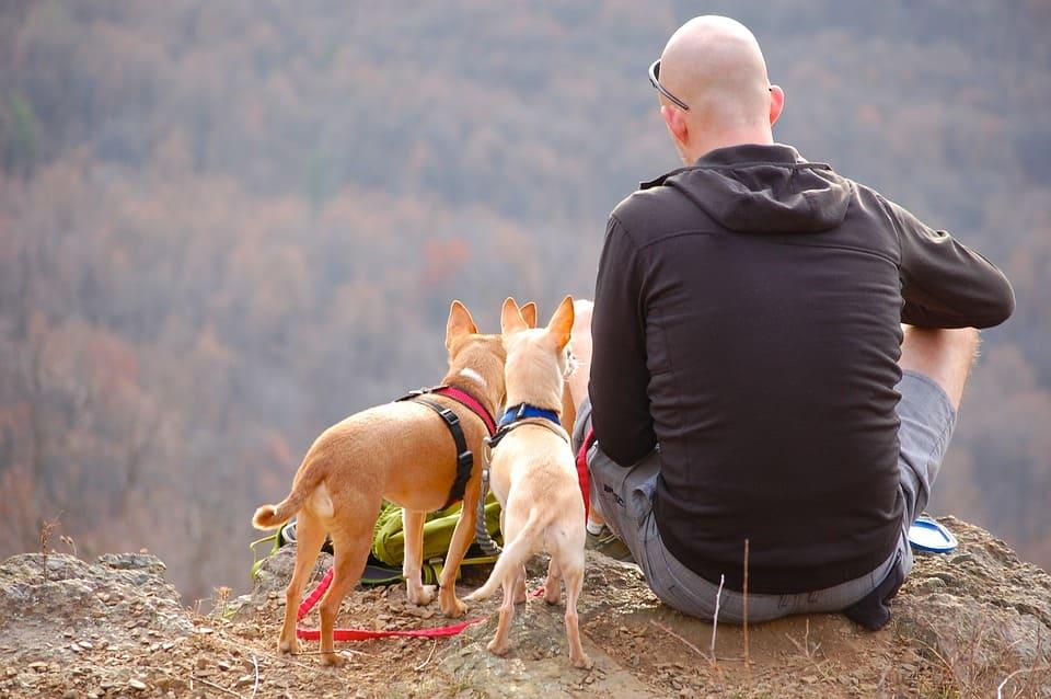 Man med hundar