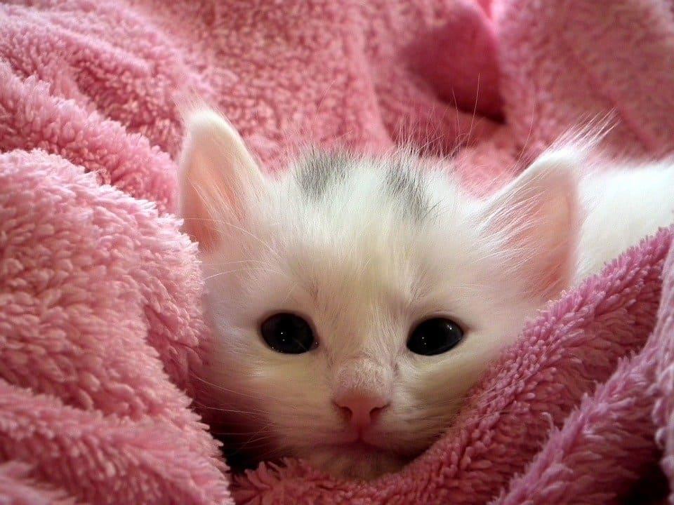 Söt kattunge